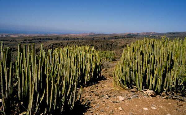 Fotos Gran Canaria